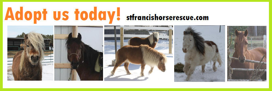 http://www.stfrancishorserescue.com/adoptable-animals.html