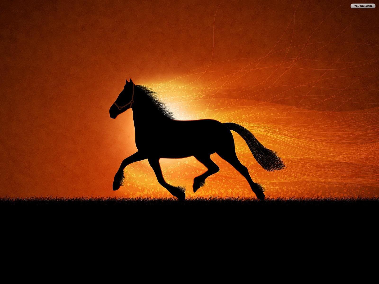 http://2.bp.blogspot.com/-Ts1cx1hlXf0/TWs9iGDERcI/AAAAAAAASiw/vK6rS8ambOU/s1600/black_horse_wallpaper.jpg