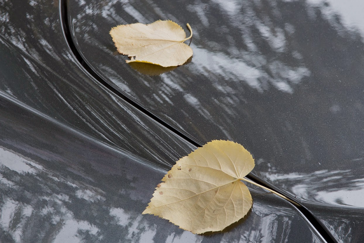 moment: two leafs on a grey car