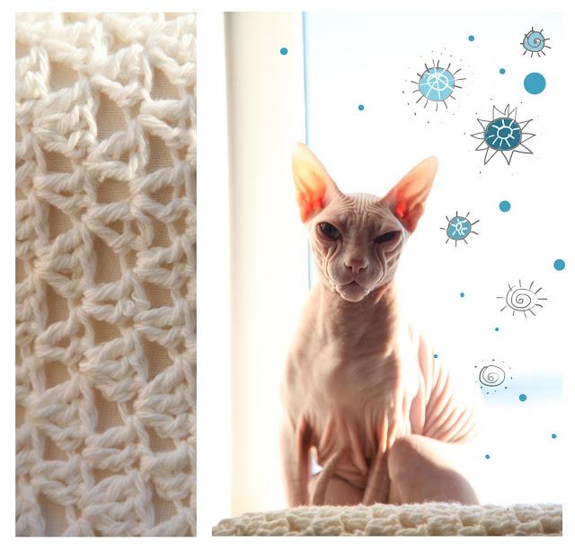 лысая кошка, лысый котик, сфинкс