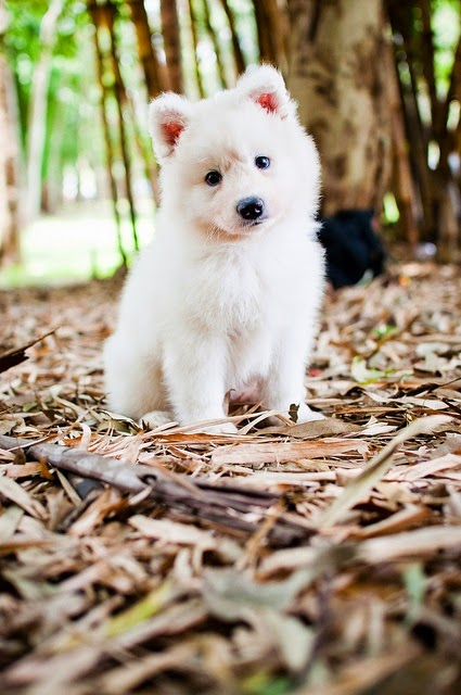 TOP 5 FAVORITE WHITE DOG BREEDS