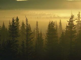 Cuentos y relatos sobre el respeto al bosque.