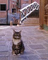 Gatito veneciano