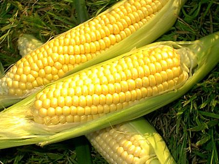 Manfaat Jagung Manis Rebus untuk Diet Sehat dan Enak