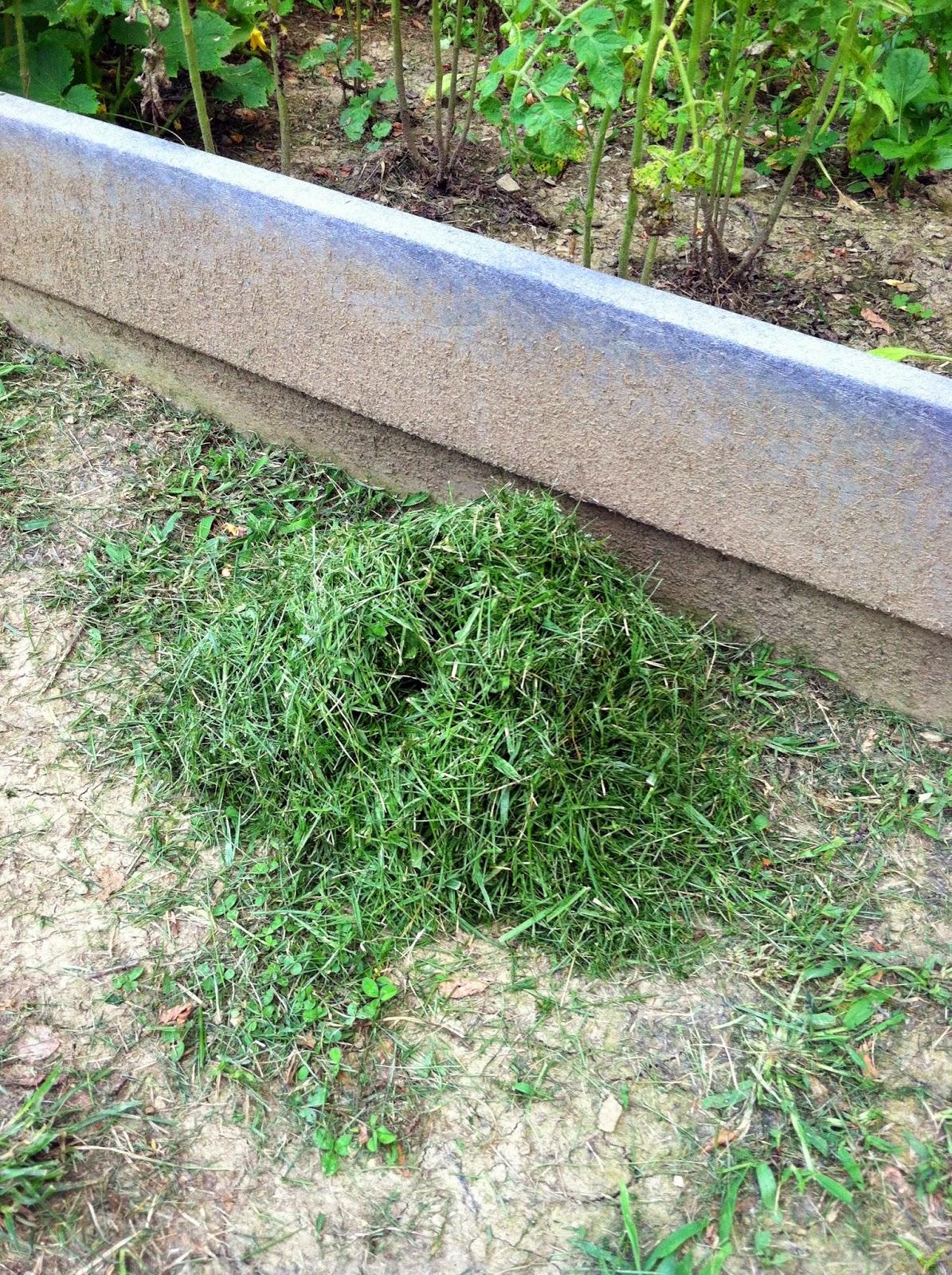 grass clippings as fertilizer