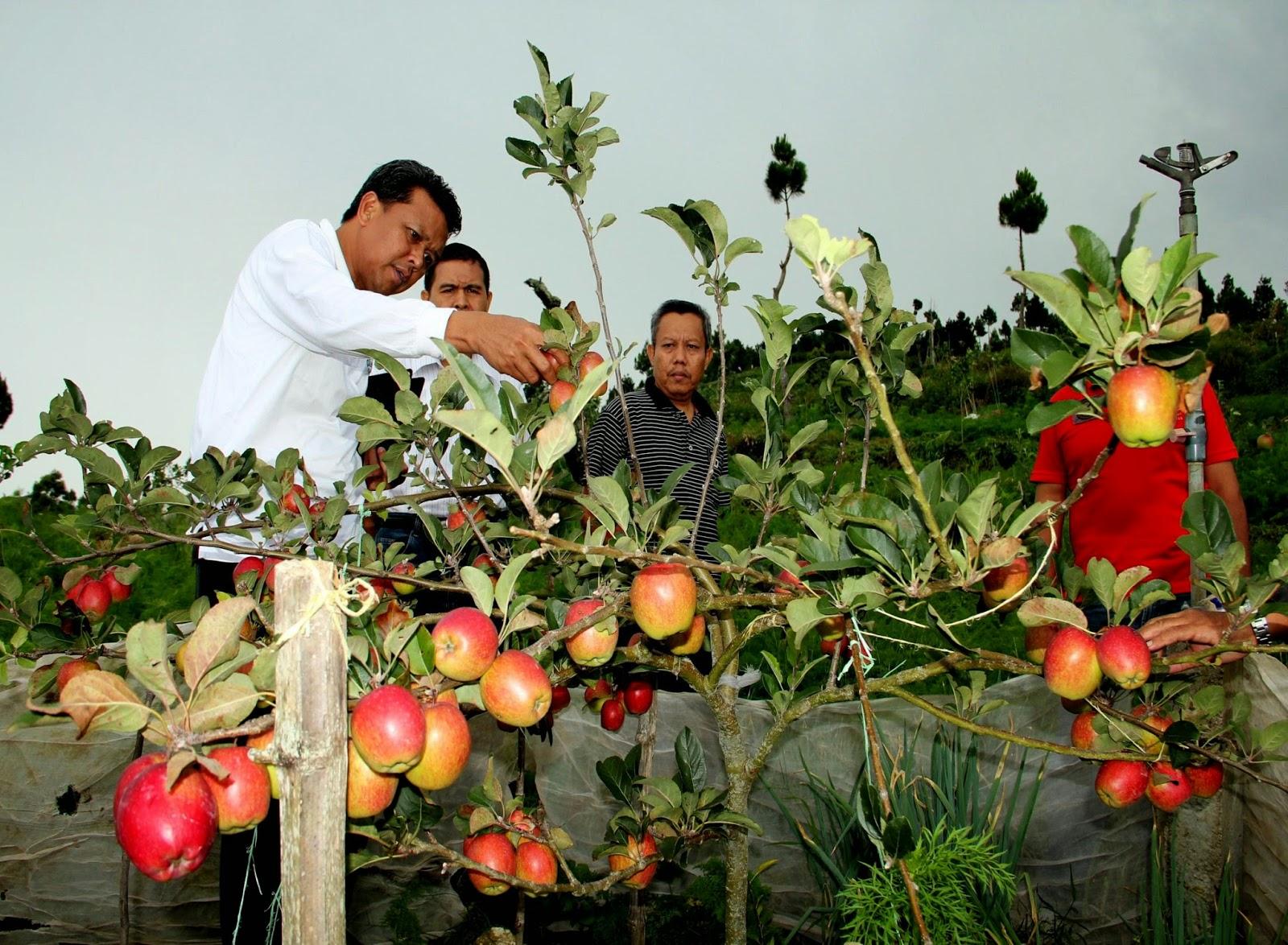 22 Staf Pertanian Sumba Tengah Belajar di Bantaeng