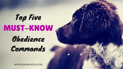 Dog Obedience Commands