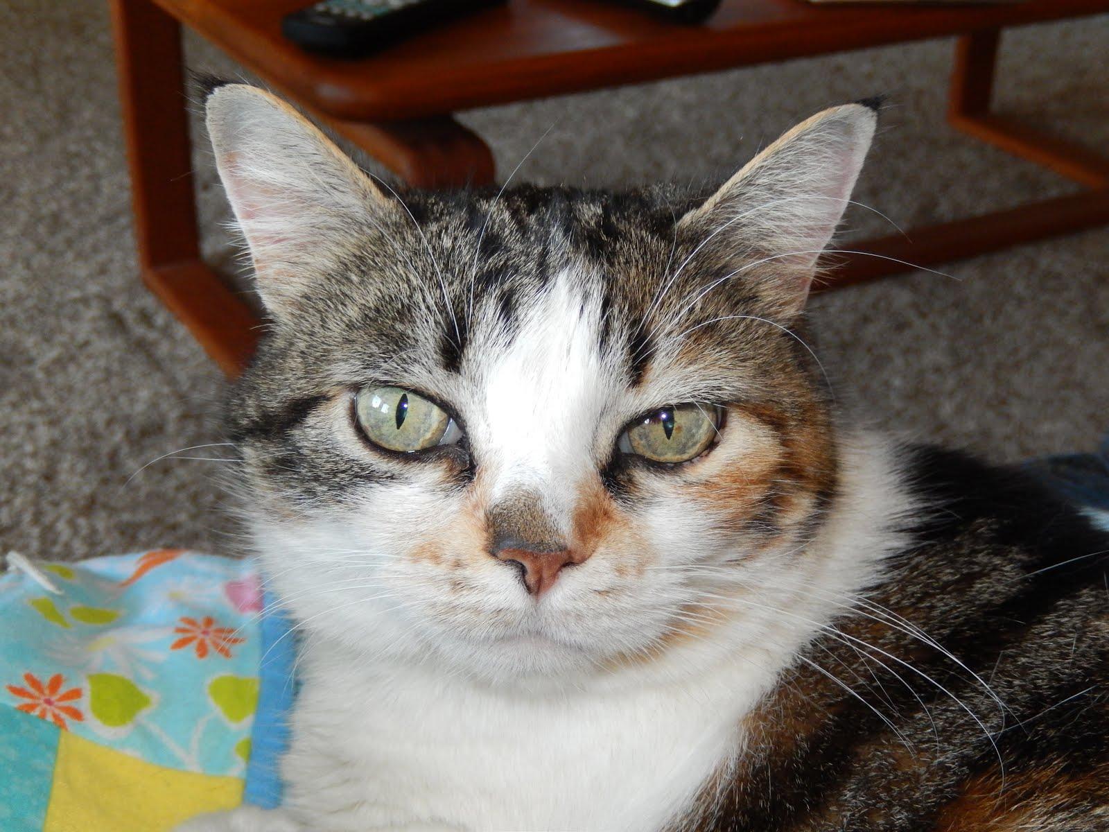 Gracie (2001 - 2015)