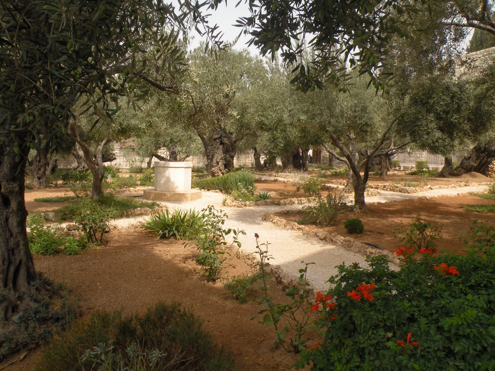 The Salty Gardener Garden Of Gethsemane