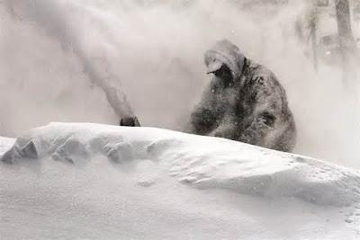 N.Y. 3 Feet Of Snow Photos