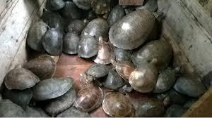 Tartarugas e outros quelônios foram devolvidos à natureza depois da operação