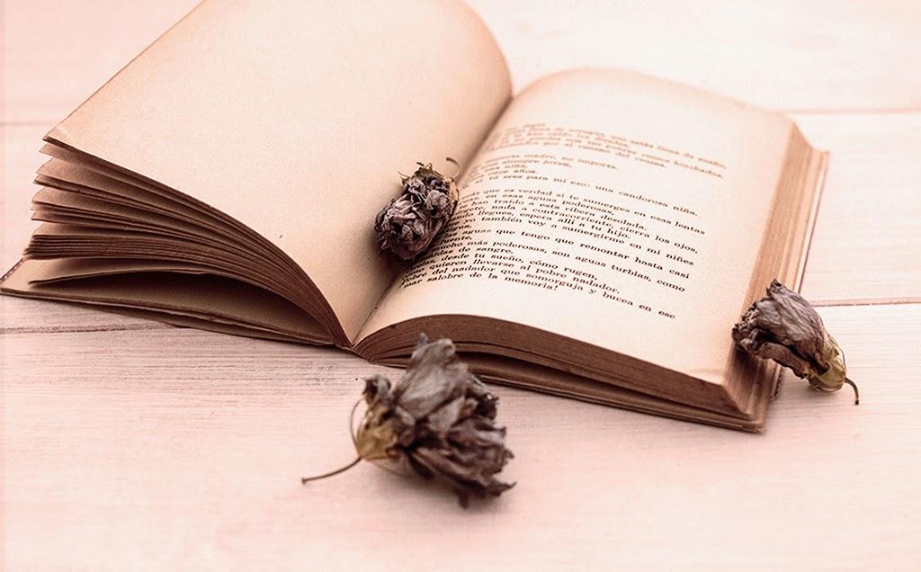 fotografía de libros y flores