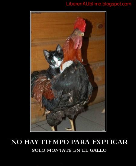 subete al gallo