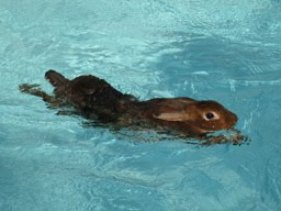 Continuous Exercising In Our Heated Pools Keeps Our Rabbits Healthy and Strong