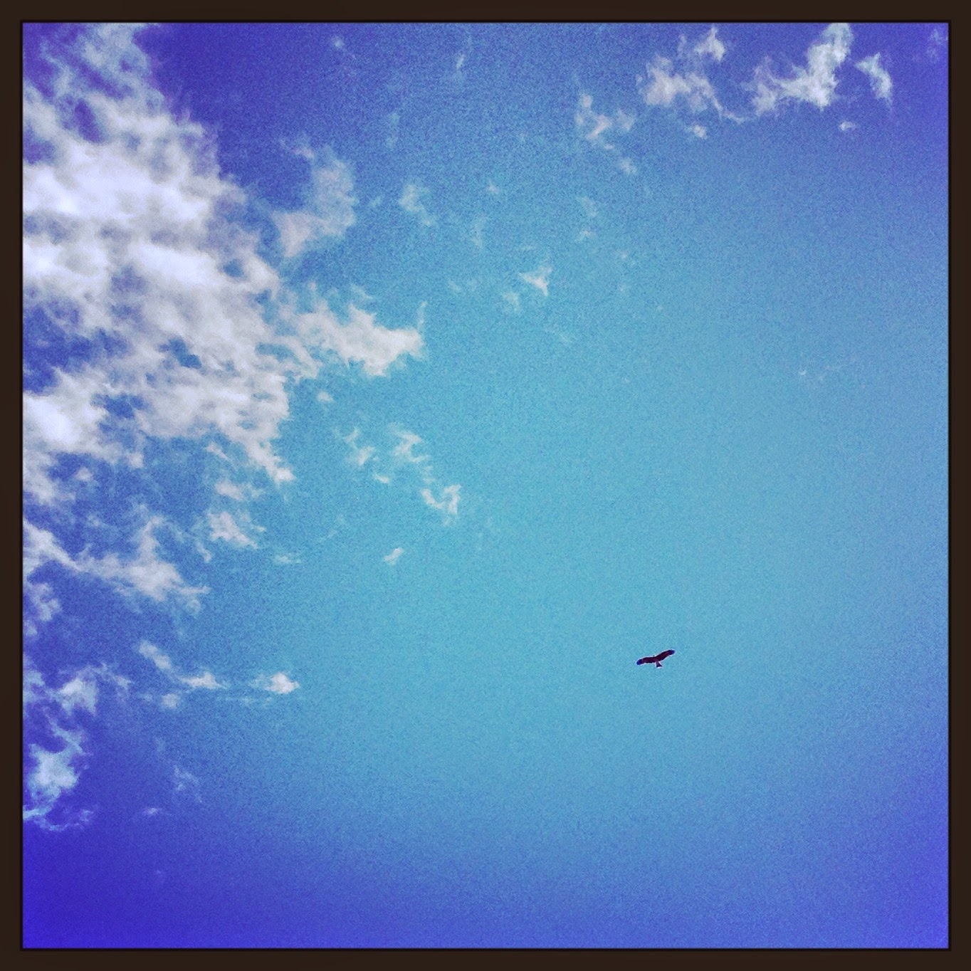 Bright the hawk's flight on the empty sky