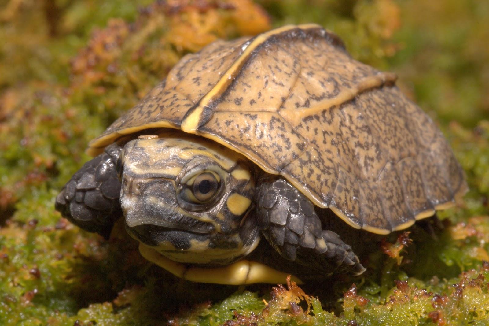 Tennessee Aquarium Blog: October 2012