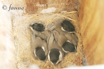 Box full of Chickadees