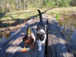 BẠN THÚ MẾN YÊU * SWEET ANIMAL FRIENDS