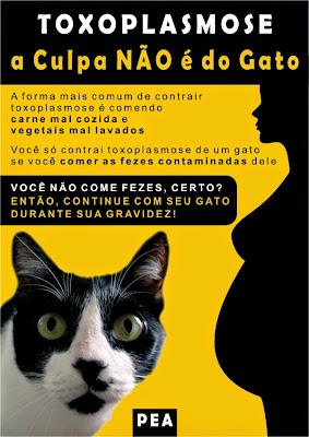 Banner educativo sobre gatos e toxoplasmose