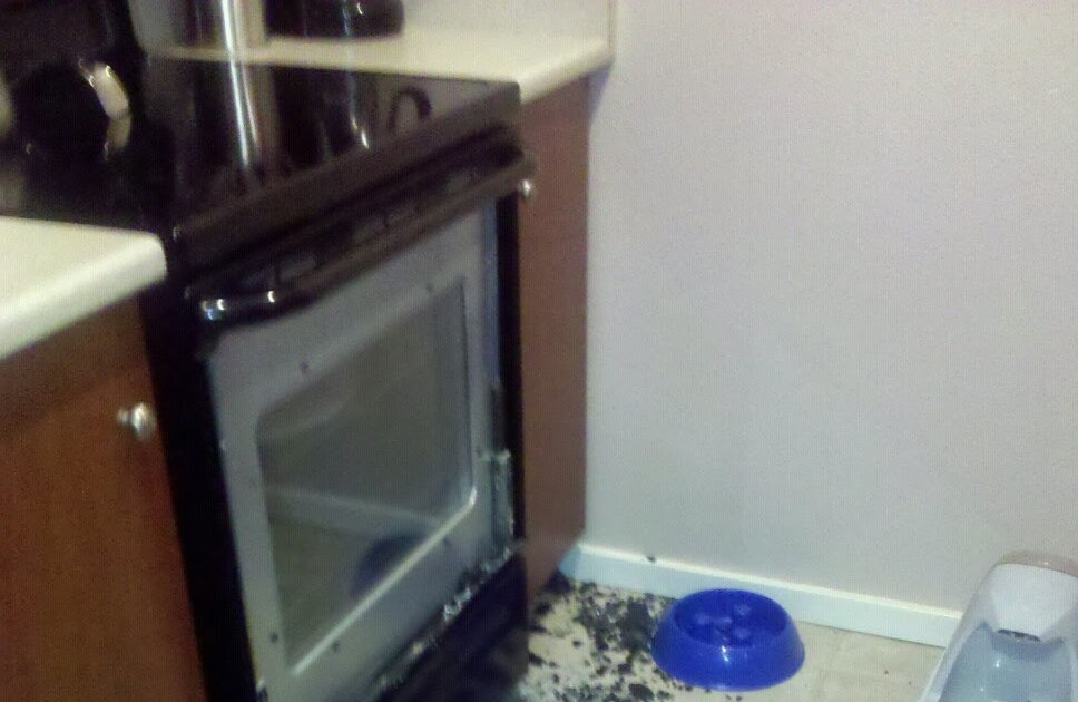 Three Commies And A Corgi Shattered Stove
