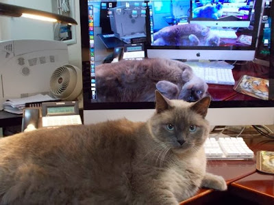 Un gato en la Matrix