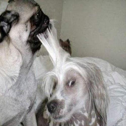 Fotos Divertidas de Perros, parte 2