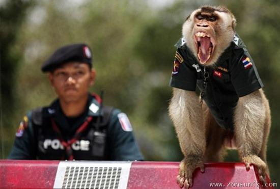 gambar+lucu-monyet+lucu-funny+picture.jpg