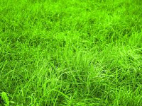 7 Grass Benefits for health