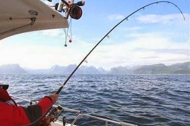 Pertarungan Seru Mancing Dapat Ikan Besar