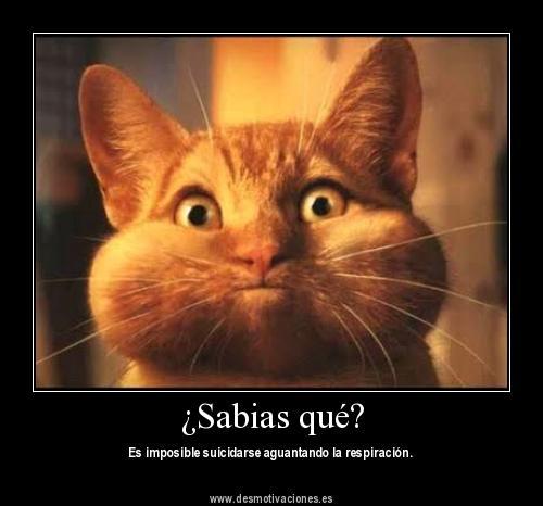 Las imágenes más chistosas del mundo Taringa!