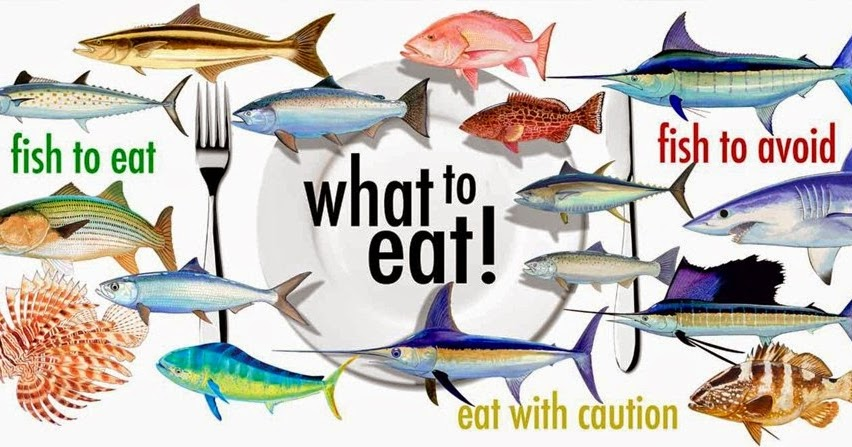 Seafood restaurants seafood selection tips for What is the best fish to eat