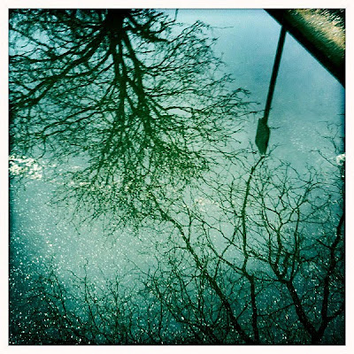 Long-Island-Springtime-Tree-Reflection