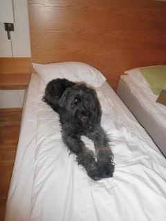 hund, säng