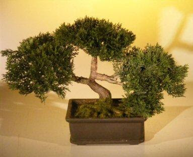 artificial light for bonsai trees