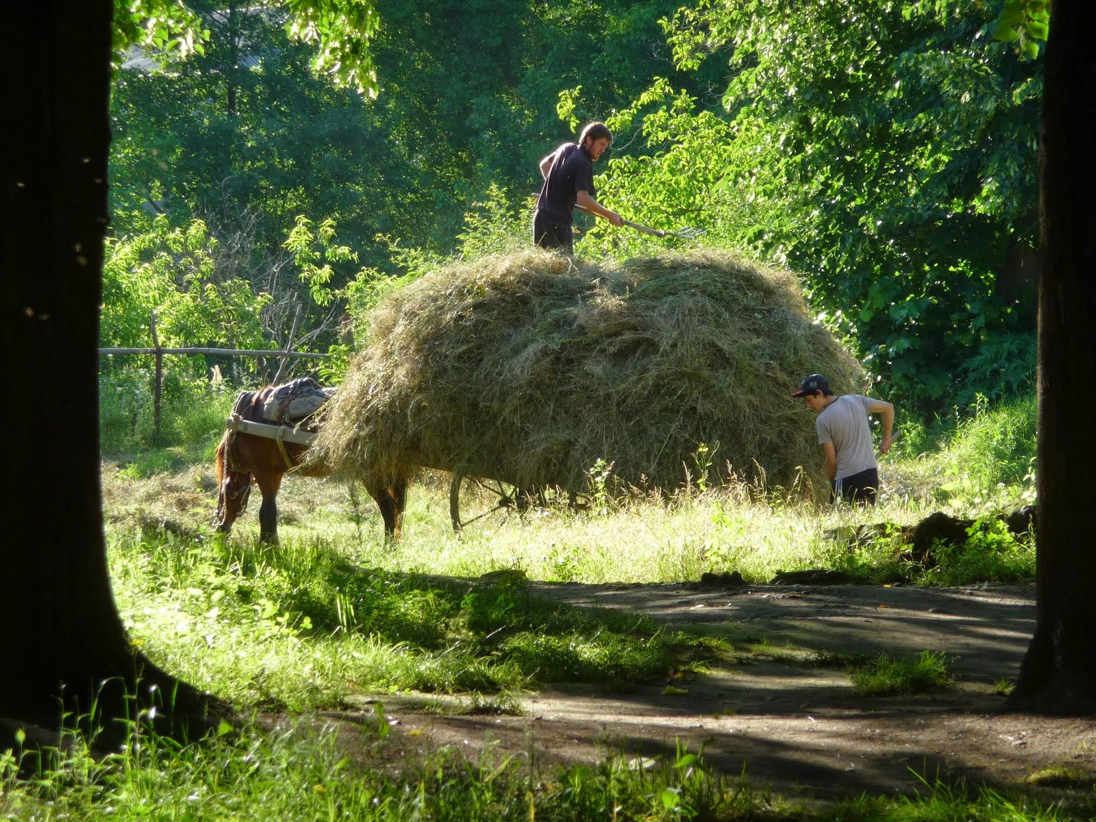 Hay making in Jokolo