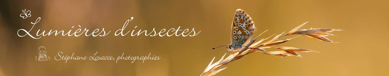 Lumières d'insectes
