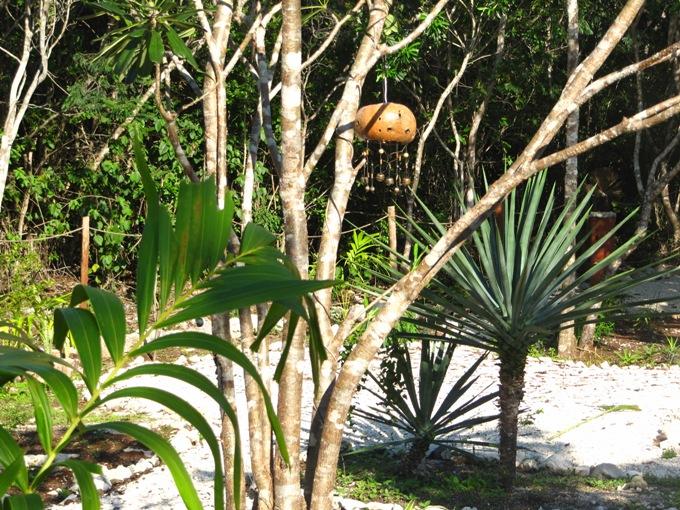 jardines económicos para casas en Tulum, Playa del Carmen - plantas