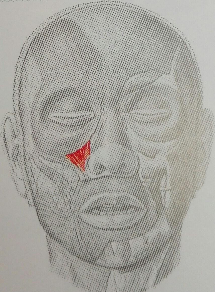 Músculos de la mímica: Elevador propio del labio superior y músculo ...