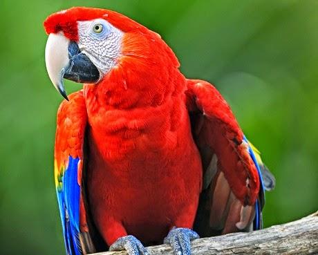 berbagi+10 Jenis Jenis Burung Paling Indah di Dunia