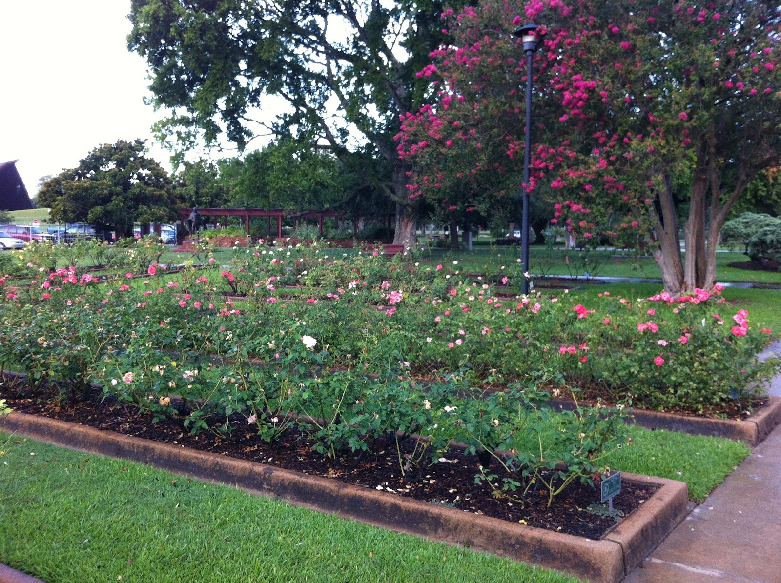 the rose garden - Houston Garden