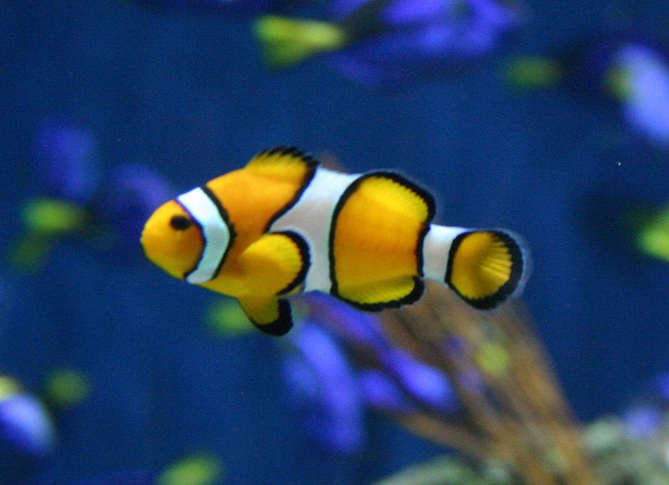 Fish ~ Animals World
