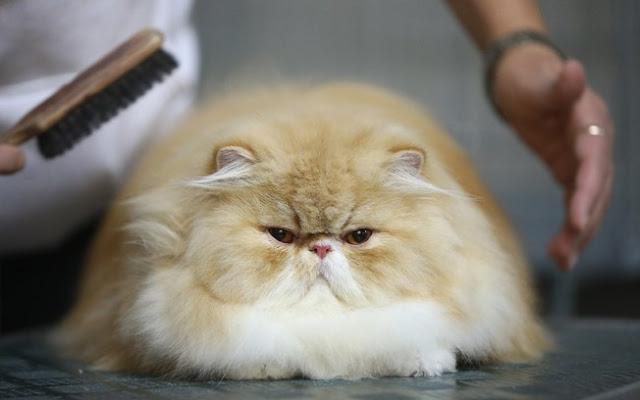 puppies  Dicas para Cuidar Melhor de seu Gato