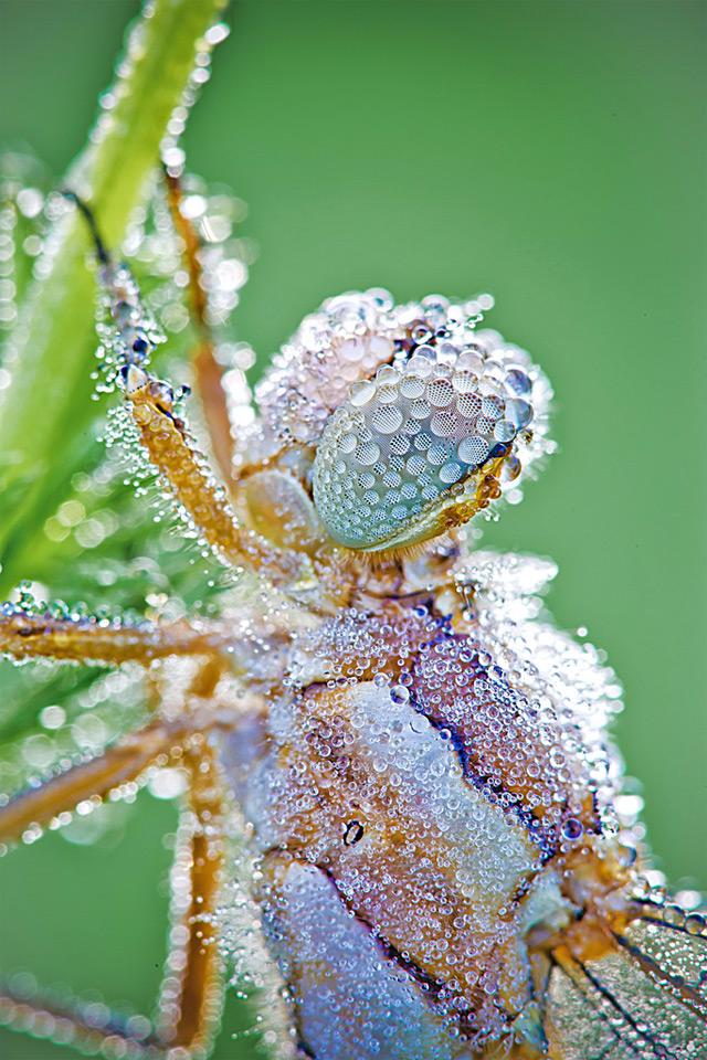 gotas de rocio sobre insecto