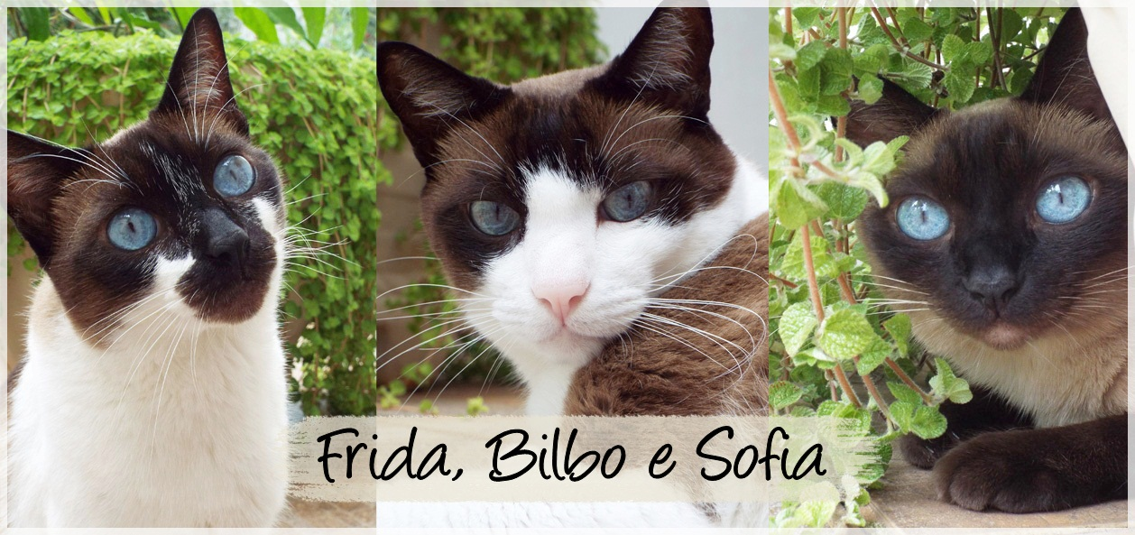 Frida, Sofia e Bilbo Cats