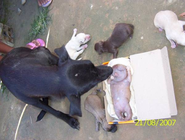 """Cachorro nasce com """"feições humanas"""""""