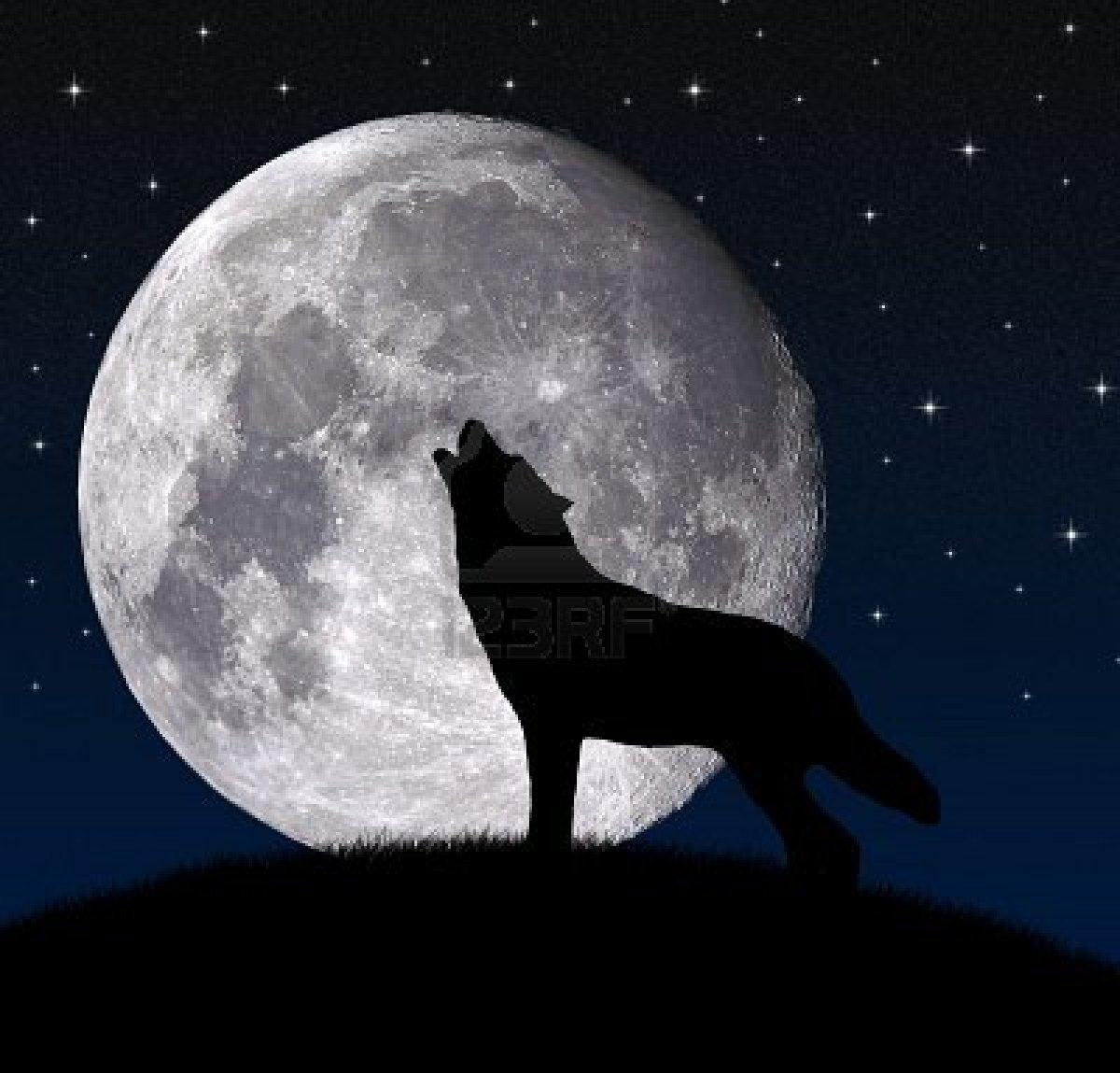 Image Fotos De Lobos Aullando A La Luna Download