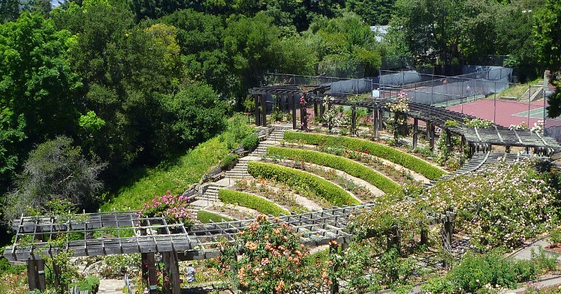trailing ahead berkeley rose garden trails in a theater of roses - Berkeley Rose Garden