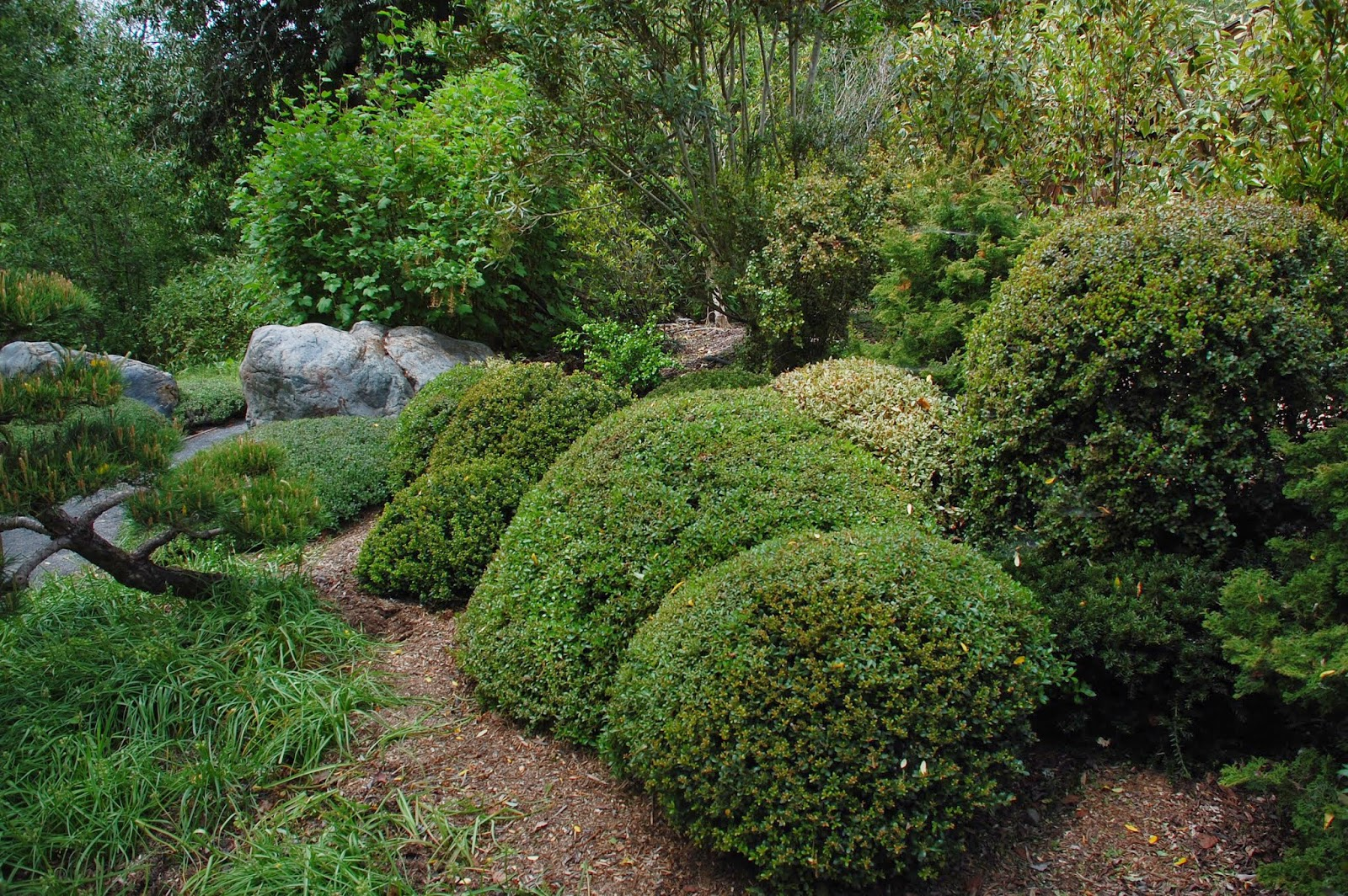 Robert ketchell 39 s blog pruning and the japanese garden for Japanese garden bushes