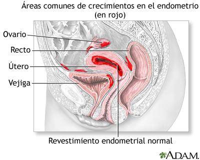 penetrada hasta el utero