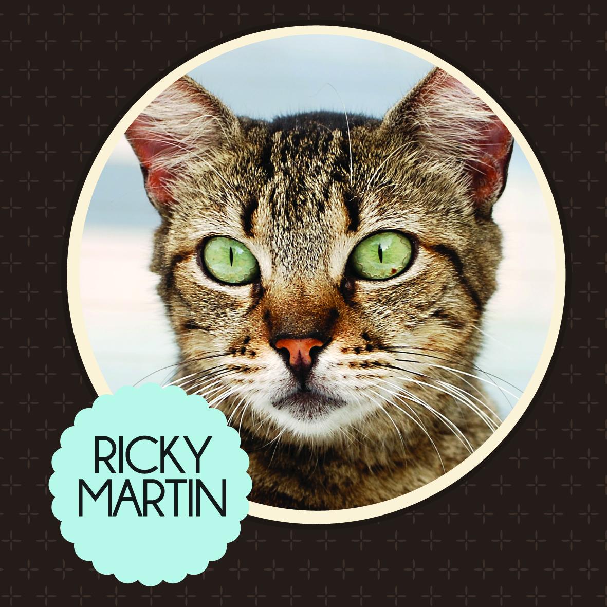 http://2.bp.blogspot.com/-U05rWSVaOAQ/USwBytmaYYI/AAAAAAAADWQ/4K1Cs2iGw10/s1600/ricky+martin.jpg